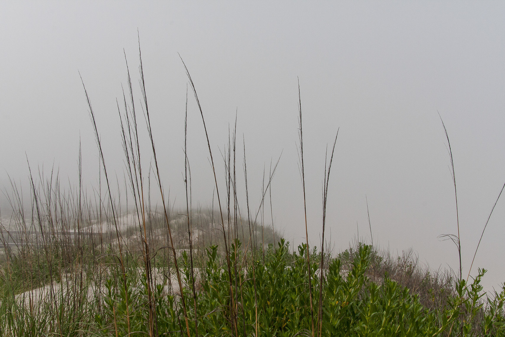 Sea Grass in Fog